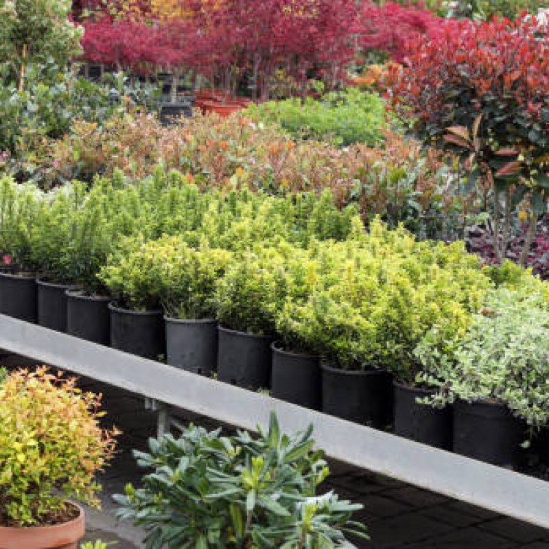 plants for sale in the greenhouse Florist in Spring